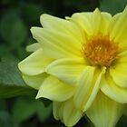 English Summer - Yellow Flower by Vullix