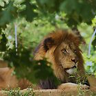 king of the jungle by ANNABEL   S. ALENTON