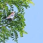 Bird in the Blue Sky by Vullix