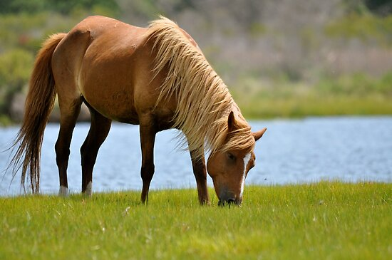 Wild Assateague  by Monte Morton