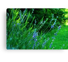 I think I am an Herb! Canvas Print
