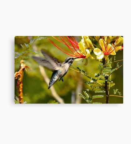 Hummingbird Dining Canvas Print