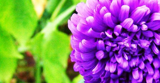 Purple Ribbon Flower by Vullix