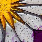 Sunrayze by Amy Hochman