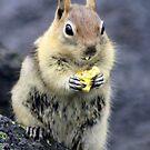 Popcorn Snack by Chappy