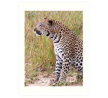 PERFECT CREATION - THE LEOPARD - Panthera pardus Art Print