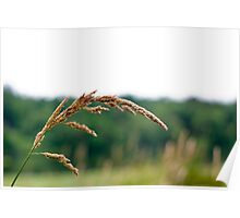 Long Grass in the Breeze Poster