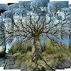 Old Oak, Morning, Argyll by cuilcreations