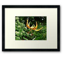 Tiger Wings Framed Print