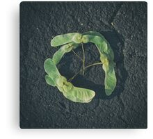 Seed and soil theory Canvas Print