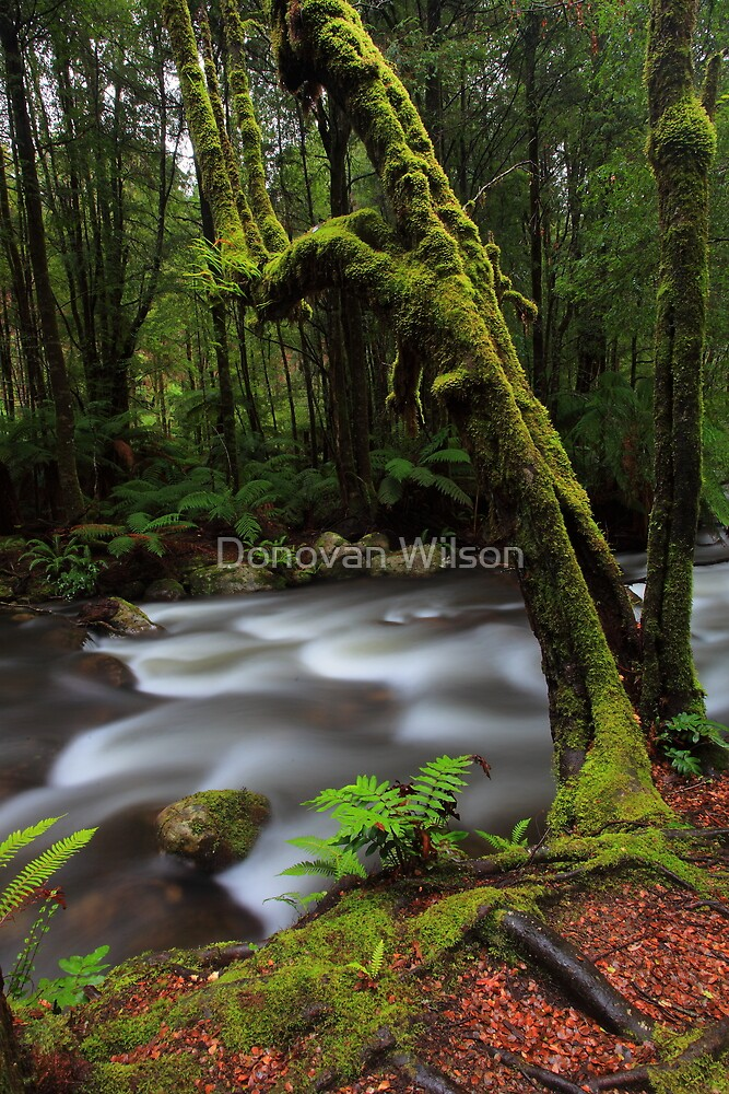 Taggerty River by Donovan Wilson
