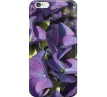 hydrangea bloom iPhone Case/Skin