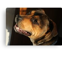 dog Staffordshire Bull terrier Canvas Print