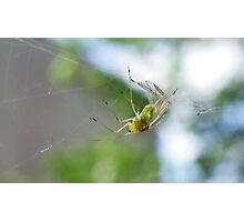 Greenfly Caught! Photographic Print