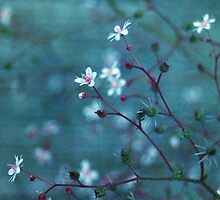 filigree I by Iris Lehnhardt