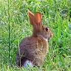 Peter Cottontail by carolinagirl10