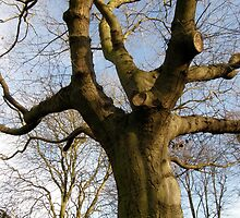 LONDON PARKS NATURALLY 8 ~ NATURE STANDS TALL  by Tuartkatz