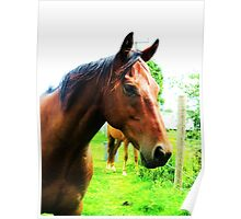 Headshot of a Thoroughbred Poster