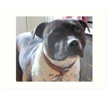 Headshot of a Staffordshire Bull Terrier Art Print
