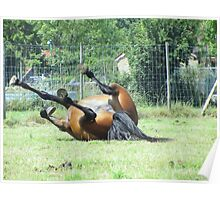 Thoroughbred Rolling Poster