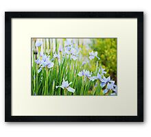 bluebirds of bliss... Framed Print