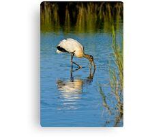 Wood Stork in Golden Light Canvas Print