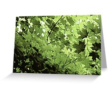 Mostly Maple Matrix Greeting Card