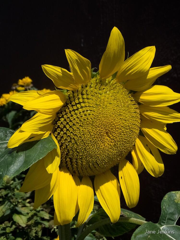 Sunflower Face by Jane Jenkins