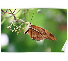 Butterfly in Brown and Gold Poster