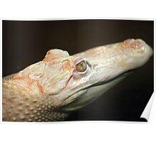 Albino Crocodile Poster