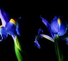 irises by marysia wojtaszek