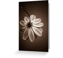 Your Beauty Still Shines Through..... Greeting Card