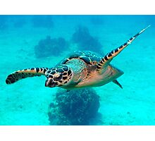Floating turtle Photographic Print