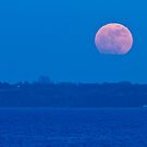 Supermoon rising by Steen Nielsen