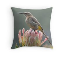 Sugarbird on Protea Throw Pillow