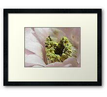 Gymnocalycium mihanovichii super macro Framed Print