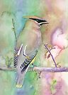 Bohemian Waxwing by arline wagner