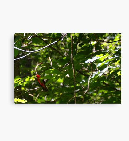 Scarlet Tanager Canvas Print