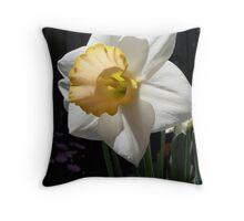 White & yellow trumpet daffodil Throw Pillow