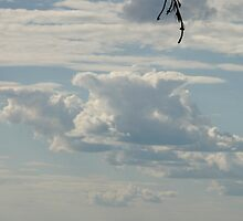 WHAT? Pigs do fly...Up high in the sky by MaeBelle