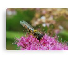 Hoverfly in the Pink. Canvas Print
