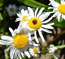 Daisy and Ladybug by jewelsofawe