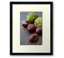 Scattered Warm Brown Conker Seeds and Shells Framed Print