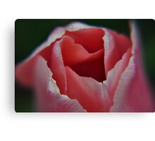 tip of a pink tulip at Kingwood Center Canvas Print