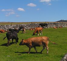 Grazing Dales Beasts by Kat Simmons