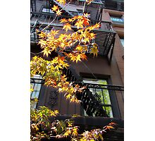 Urban Maple, NYC Photographic Print
