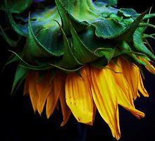 sunflower by marysia wojtaszek