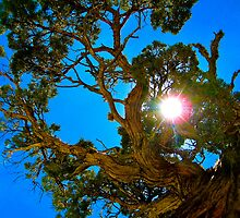 Looking Up by A. Kakuk