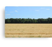 Grain Field on the Prairies Canvas Print
