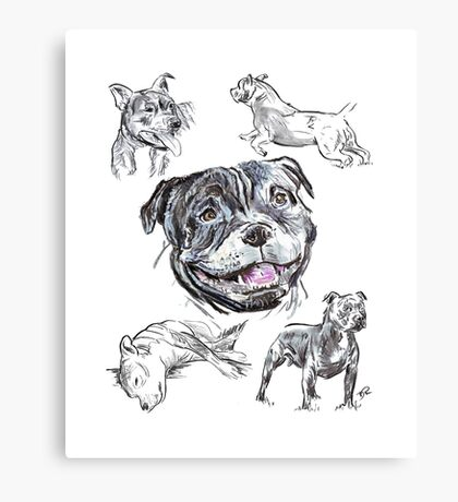Mixed Media - Staffordshire Bull Terriers Canvas Print